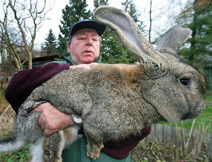 coelho-gigante.jpg